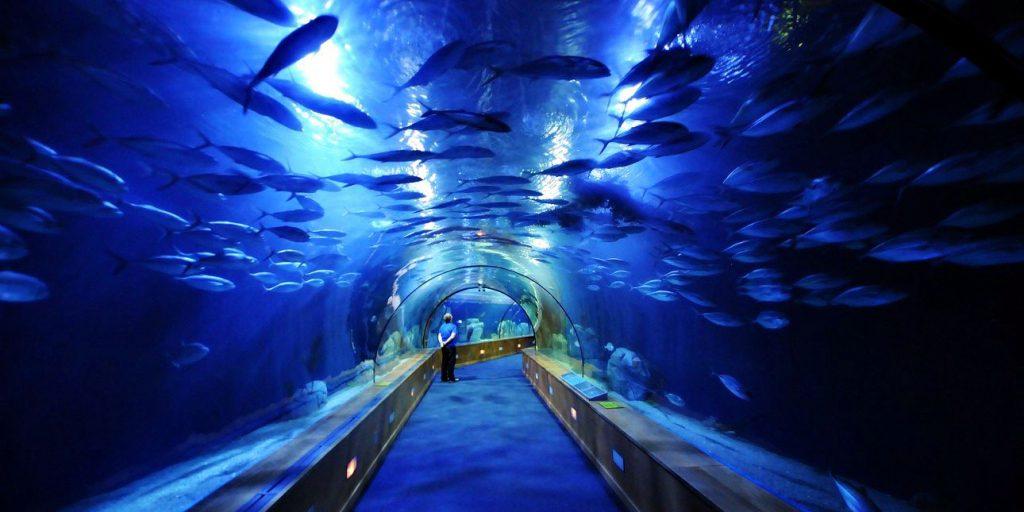 Океанариум Валенсии. Океанографический парк Города Наук и Искусств